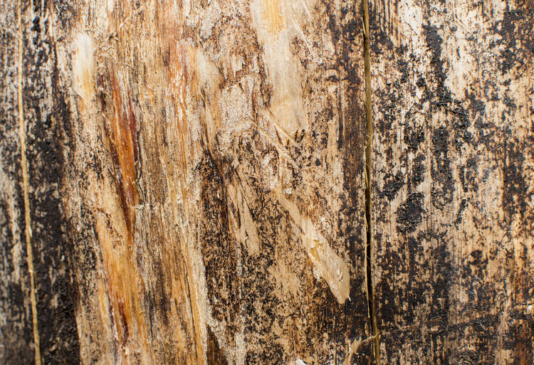 Old Wood texture. Wood texture of dried tree Abstract Backgrounds Board Close-up Cracks Crust Dark Dried Fracture Grunge Material Old Pattern Pattern, Texture, Shape And Form Rough Scratched And Cracked Wood Stem Structure Textured  Textured  Textures And Surfaces Vintage Wood - Material Wooden Woody