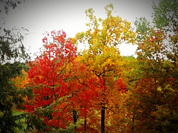 West Virginia Almost Heaven Fall Colors