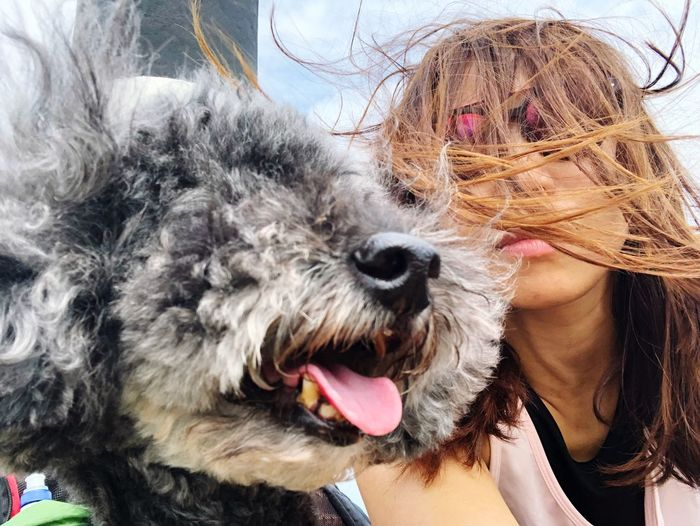 Flying Hair Me Girl Like The Moment Adventure Windy Moments Match Top Of The Mountain Hiking Windy Day Selfie With Dog Selfıe Canine Dog Domestic Animals Animal Themes One Animal Mammal Pets Hair Sticking Out Tongue Close-up Animal