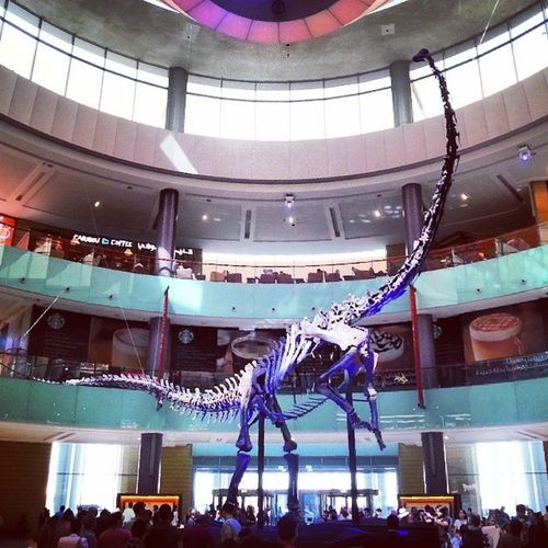 Dinosaure Fossile Squelette Dinosaur Dubai UAE DubaiMall Dubai Mall Skeleton Fossil