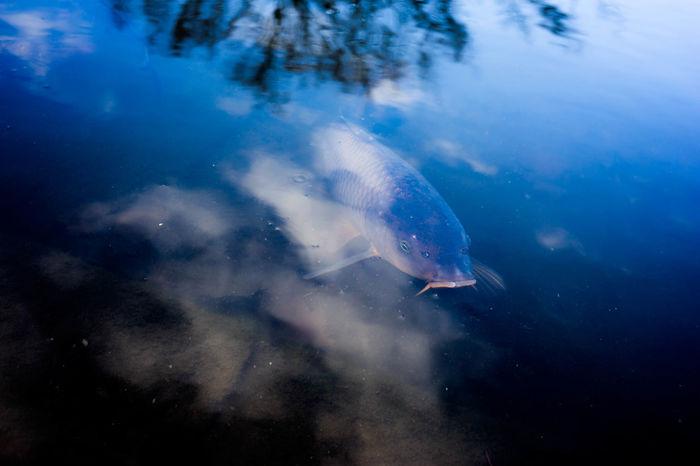 Blie Blue Catfish Lake Reflection Water