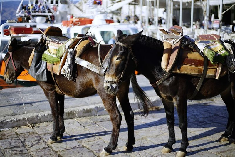 Transportation Animal Themes Mammal Mode Of Transport Domestic Animals Day Horse Cart Outdoors People Close-up Travel Destinations Whitewashed Low Angle View First Eyeem Photo Streetphotography Animal One Animal Santorini, Greece Vacations Sky Architecture No People Adult Sports Race