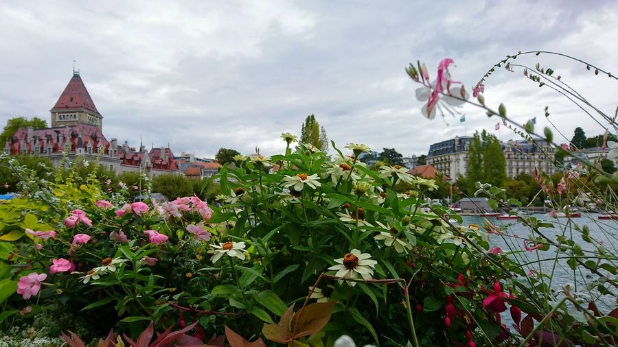 Flower Cloud - Sky Outdoors Plant Nature Sky No People Building Exterior Architecture Beauty In Nature Day Lausanne Lausanne (CH) Landscape Low Angle View Nature Photography Nature Nature Lover First Eyeem Photo The Week On EyeEm EyeEmNewHere