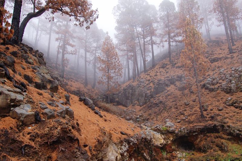 Misty Forest Tall Trees Misty Mornings Orange Color Pastel Colors No People Mountain Desolate