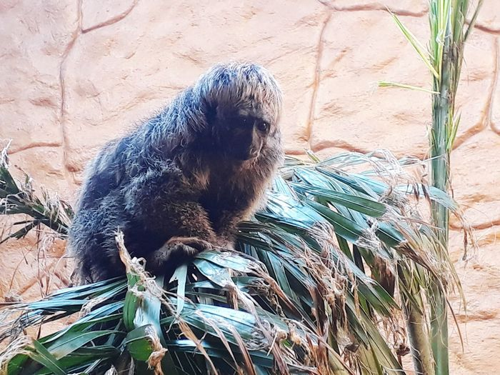 monkey in