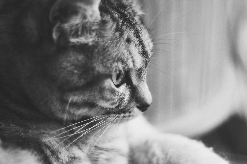 Little grumpy cat First Eyeem Photo Pet Portraits Pet Portraits