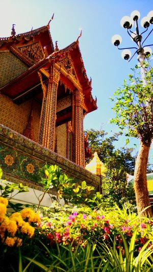 Flower Religion Architecture Buddha Temple Buddha Temple, Thailand Nature Outdoors Outdoor Photography Travel Destinations Travel