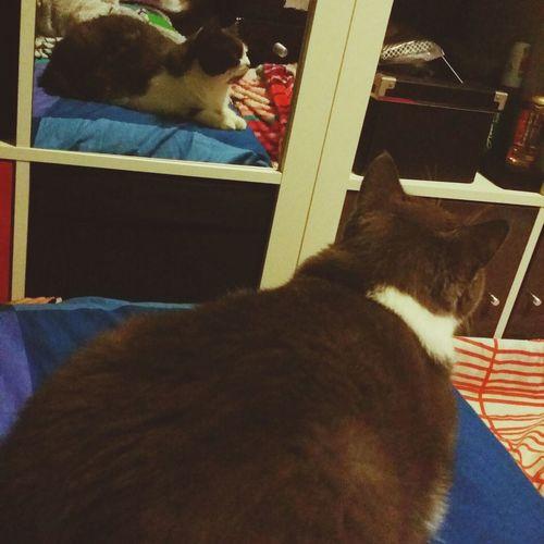 Catsoftheworld Kittylove Pets Cats