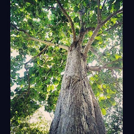 """""""มิตรภาพ""""เหมือน""""ต้นไม้"""" หยั่งรากลึกลงดิน ผลิใบ ชูช่อสู่อากาศ เติบโต ฝ่าลมแรง พายุร้ายมาด้วยกัน ส่วน""""""""ความเชื่อ"""" นั้นเหมือน""""เงา"""" บางครั้งก็ทอดยาว บางคราก็หดสั้น แปรเปลี่ยนไปตามเรื่องราว """"เงา""""นั้นจับต้องไม่ได้ เมื่อมี""""แสง""""จึงจะเกิดเงา แต่""""ต้นไม้""""ไม่ว่าจะมืดหรือสว่าง ใบไม้ กิ่งก้าน ลำต้น และรากก็ยังอยู่ด้วยกัน ไม่เคยหายไป อย่าเห็น""""เงา""""สำคัญกว่า""""ต้นไม้""""แห่งมิตรภาพ Sak Bigtree Molome InstaDham boycitychan"""