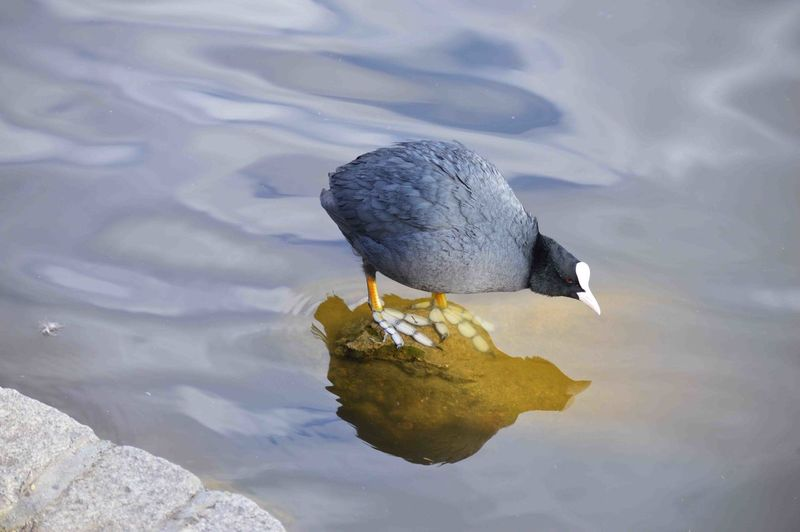 High angle view of bird on rock in lake