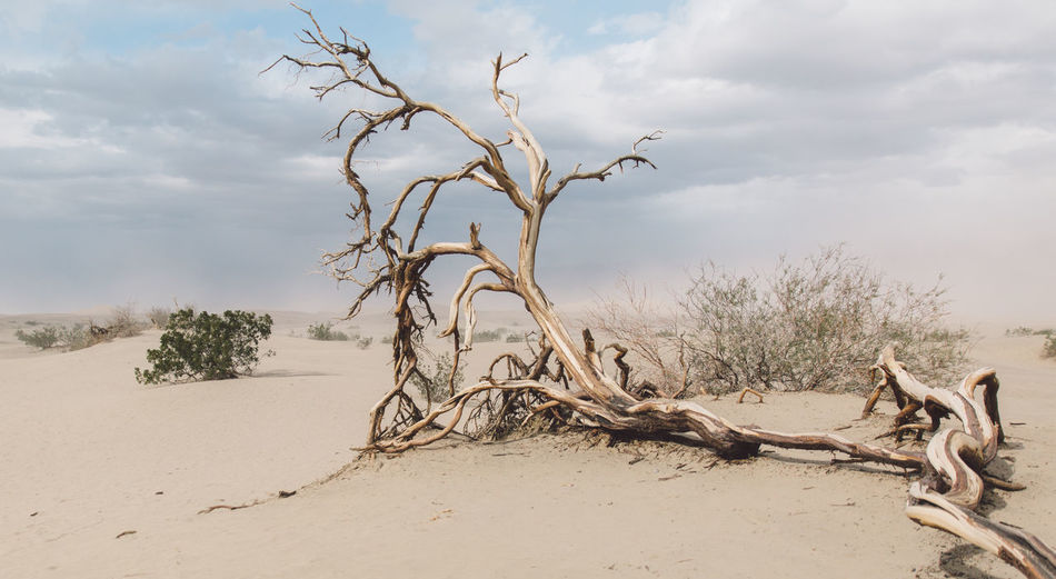 Arid Climate Arid Landscape Bare Tree Beauty In Nature Branch Cloud - Sky Day Dead Plant Dead Tree Death Valley Death Valley National Park Desert Desert Landscape Dunes Landscape Nature Nature No People Outdoors Sand Sand Dune Scenics Sky Tranquility Tree