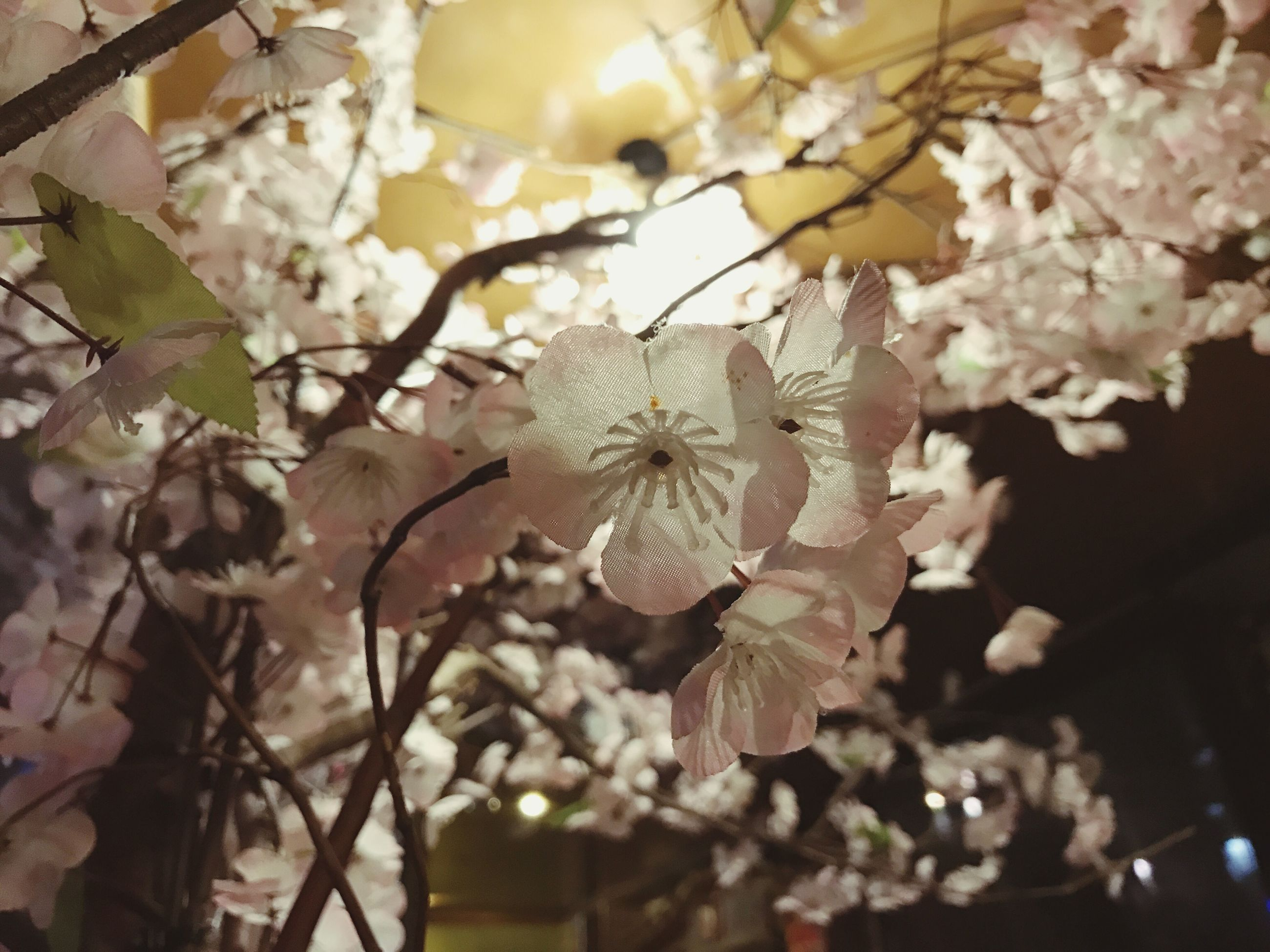 nature, growth, beauty in nature, tree, no people, springtime, low angle view, outdoors, close-up, leaf, flower, fragility, plant, day, branch, freshness, flower head