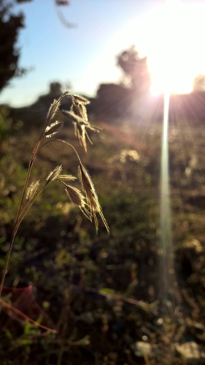 lens flare, nature, animal themes, no people, insect, focus on foreground, sunlight, close-up, outdoors, one animal, day, plant, growth, animals in the wild, beauty in nature, sky