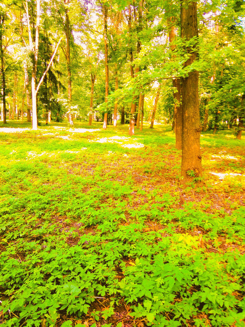 tree, nature, tranquility, growth, forest, beauty in nature, green color, tranquil scene, scenics, leaf, outdoors, tree trunk, day, autumn, no people, change, branch, landscape, grass