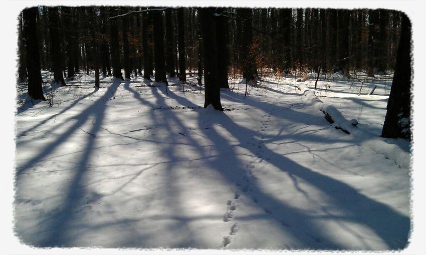 Frühling Schnee Marz Philosophenwald