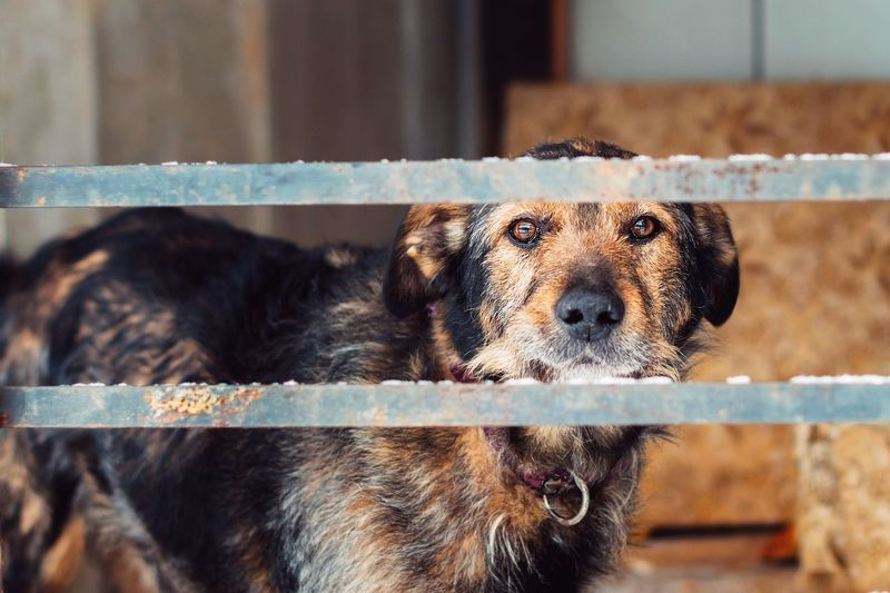 One Animal Animal Themes Mammal Pets Canine Domestic Dog Vertebrate Looking At Camera No People Portrait Animal Focus On Foreground Domestic Animals Day Close-up Animal Body Part Animal Head  Boundary Fence