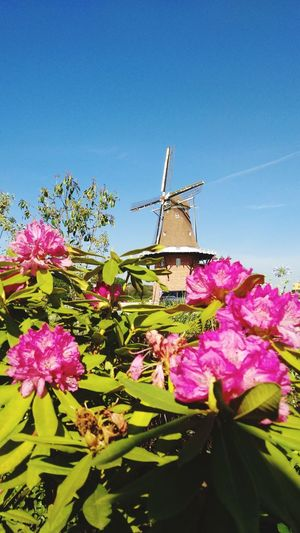 Flower Pink Color Day Nature No People Outdoors Sky Plant Fragility Beauty In Nature Freshness Water Close-up Windmill