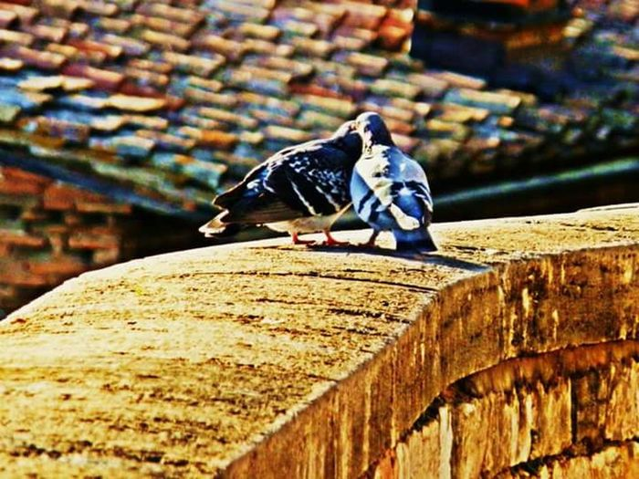 Birds Love Birdlove Italy Perugia Just Around The CornerLight Walking Around The City  Streetphotography