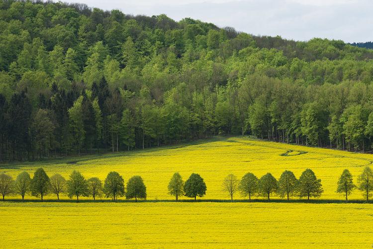 Beautiful rural