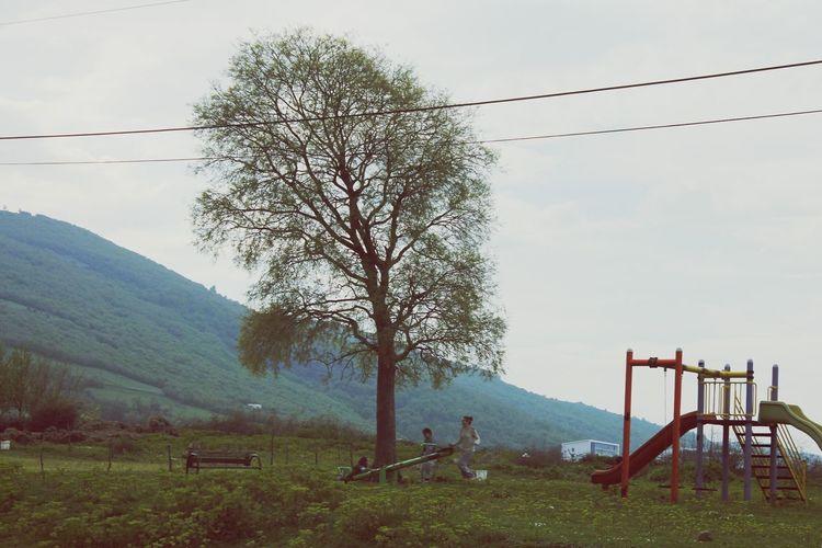 Grass Green Turkey Noble :) Tree Children Playgarden Funny Love