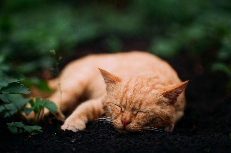 Close-up of cat sleeping on mud