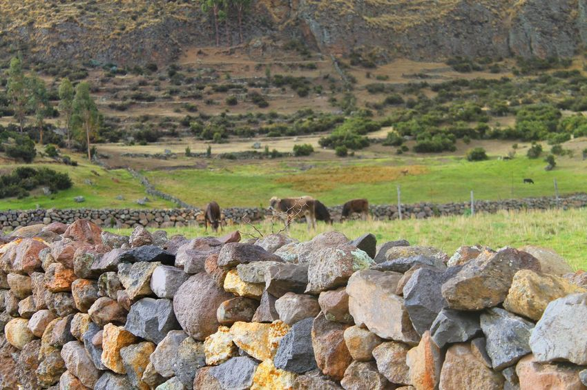 Photography taking by fisherparian in Huanca Sancos Animals Cows Green Huanca Sancos, Landscape Nature Photography Plants Rain Town Wall World