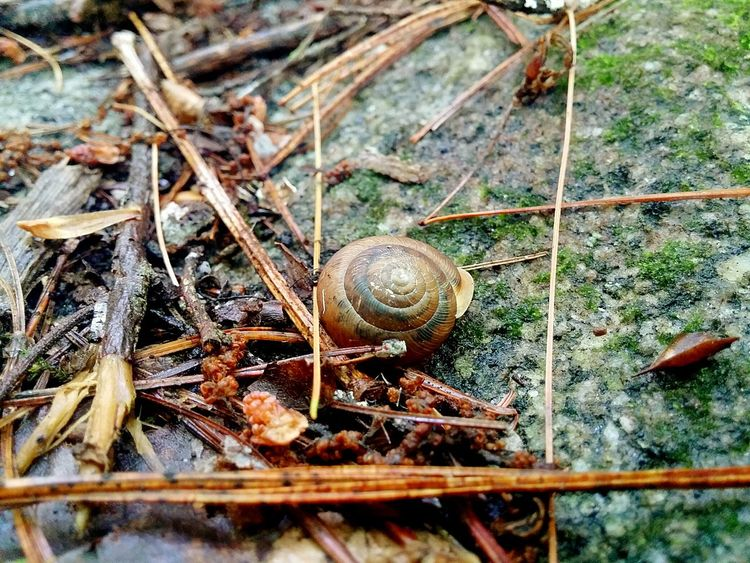 Nature Design- Snail Zoology Day Close-up Outdoors Animals In The Wild No People One Animal Animal Themes Brown Nature Nature Fragility Nature_collection Beauty In Nature Tranquil Scene Architecture And Art In Nature- Designed By Nature Something Different -something New- Something Old- Finding New Frontiers
