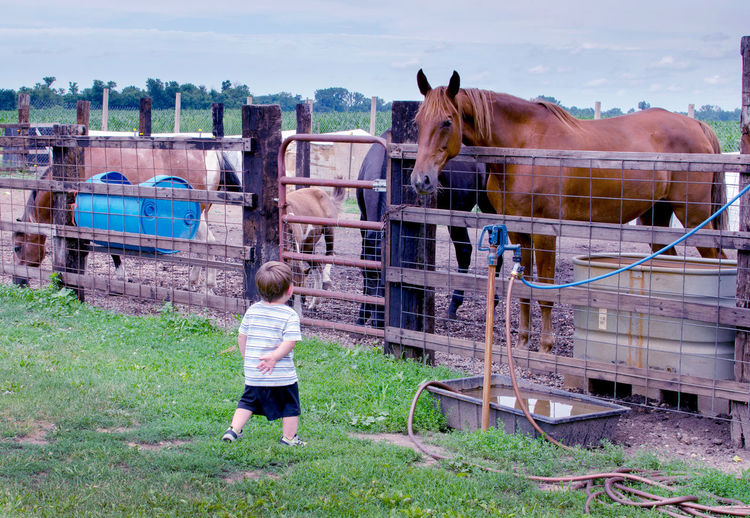 a shy little boy keeps his distance from a very big horse, but the horse is very interested in him Big Horse  Frightened  Little Boy Animal Themes Building Exterior Childhood Day Domestic Animals Full Length Grass Horse Livestock Looking At Camera Mammal Nature One Animal One Person Outdoors People Real People Sky Standing Tree Summer Exploratorium