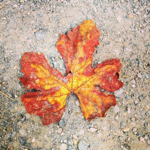 Outono Outono Eyeem Europa Oficial© Outonoinverno Cores Da Natureza Cold Temperature Cores Autumn Autumn🍁🍁🍁 Autumn Colors Autumnbeauty Folhas Secas  Leaf 🍂 Chao