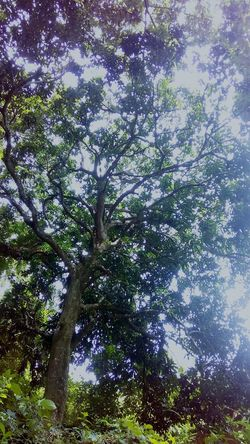 Low Angle View Tree Nature Growth Day Beauty In Nature No People