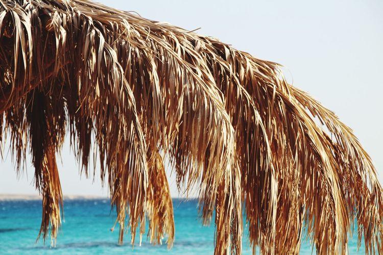 Photo by PANTI-I3R #Mahmyabeach# Mahmya Island Mahmya Korallenriff Red Sea Egypt Beach No People Beauty In Nature Clear Sky Sky Plants 🌱 Sea Water Beauty In Nature Sunny Tranquil Scene Palm Leaf