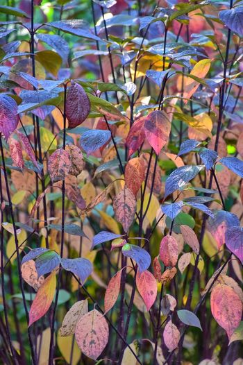 Close-up of pink flowering plant leaves during autumn