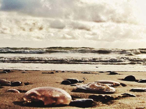 Hollidays Urlaub Strand Meer Sea Nordsee Northsea Danmark Summer Summertime Sommer Quallen Sand Showcase July Sommergefühle Lost In The Landscape Perspectives On Nature