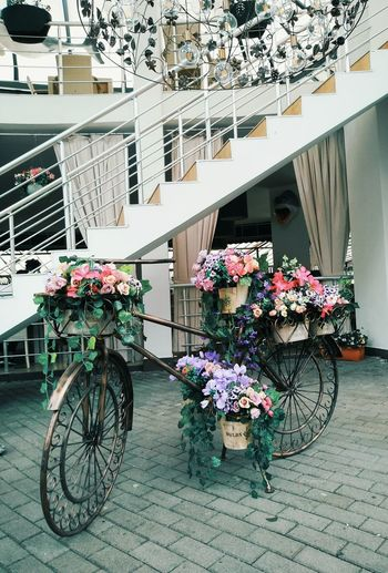 The Week on EyeEm Architecture Bicycle Building Building Exterior Built Structure City Day Flower Flower Arrangement Flowering Plant Fragility Freshness Land Vehicle Mode Of Transportation Nature No People Outdoors Parking Plant Potted Plant Retail  Transportation