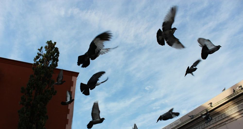Resist Bird Flying Animal Wildlife Animals In The Wild Outdoors No People