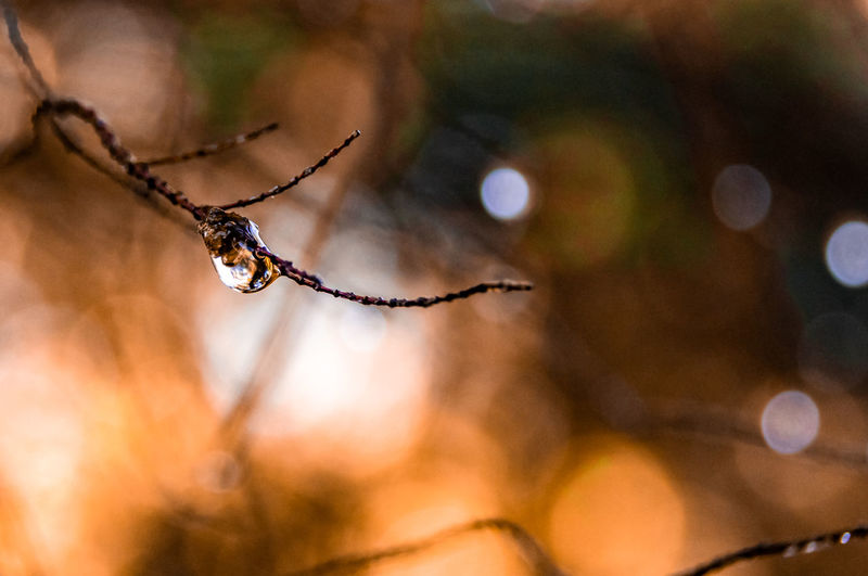 Close-up of wet spider web on twig