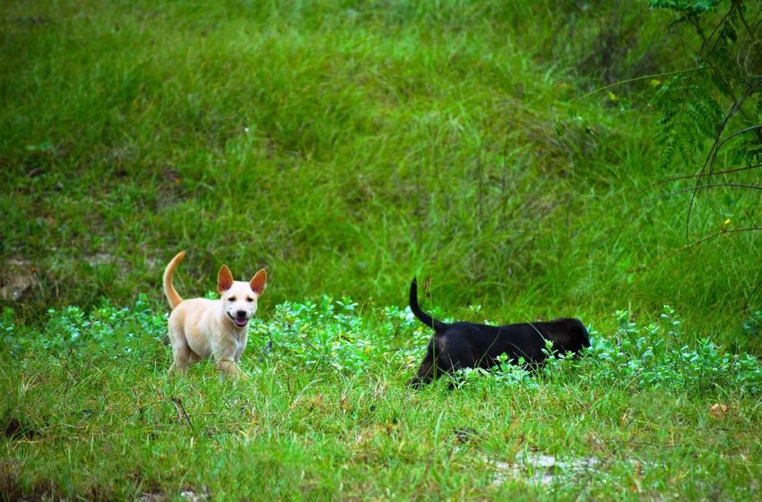 A sudden encounters Mammal Animal Animal Themes Dog Canine Grass Domestic Domestic Animals Field No People Green Color Nature Small