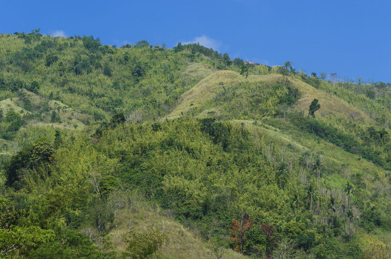 Beauty In Nature Clear Sky Day Forest Grass Green Color Growth Idyllic Landscape Mountain Nature Non-urban Scene Philippines Rizal Scenics Sky Tanay