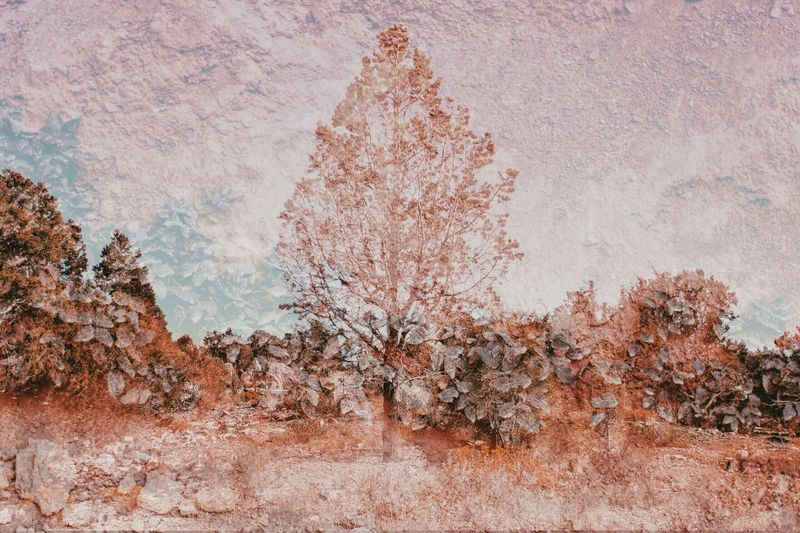 Double exposure of trees and weathered wall