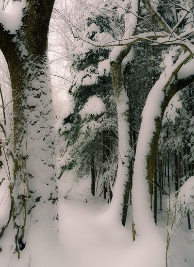 Winter Snow Cold Temperature Tree Weather Nature Tranquility Beauty In Nature Outdoors Covering No People Day Scenics Landscape