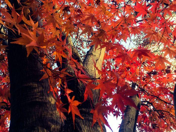 Change Autumn