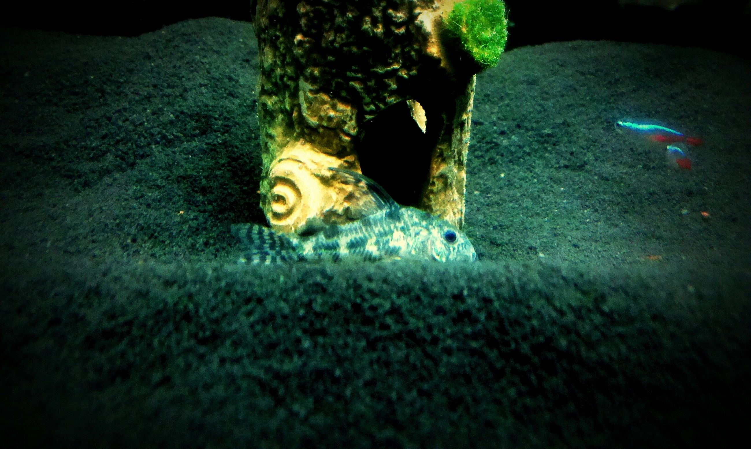 night, high angle view, close-up, indoors, creativity, no people, art and craft, toy, art, multi colored, still life, animal representation, human representation, selective focus, circle, green color, textured, ground, single object