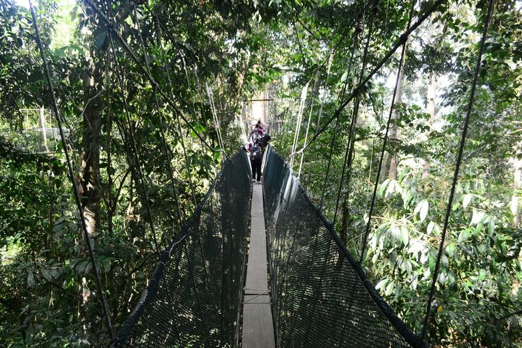 Rear view of man on footbridge in forest