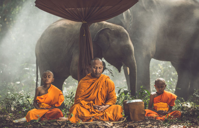 Monks meditating in forest sitting against elephants