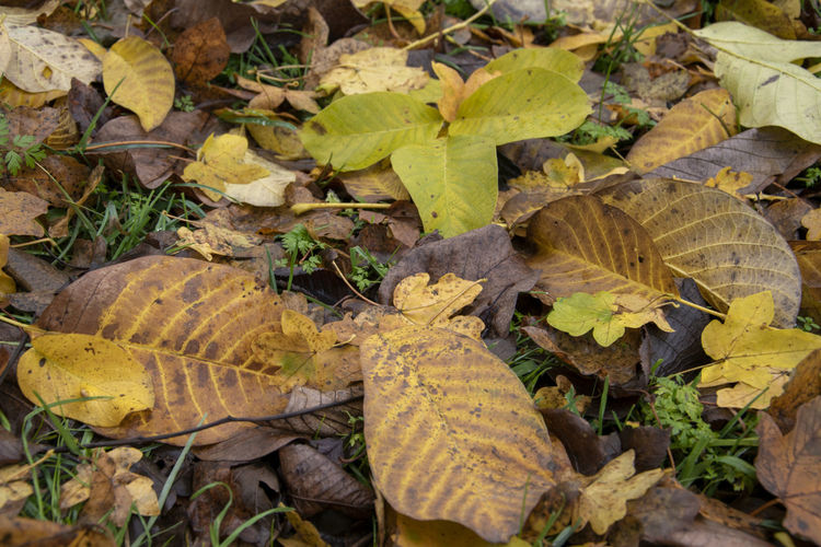 High angle view of dry leaves on road