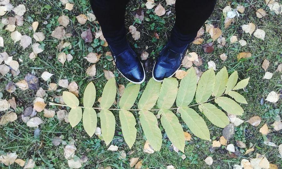листья гуляла Wolking
