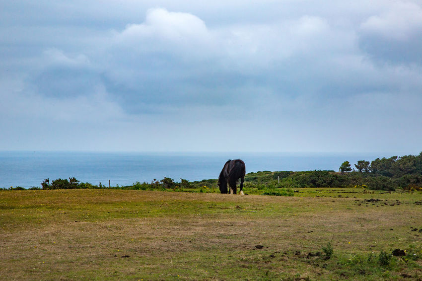 English Channel Eperquerie Isle Of Sark Animal Themes Beauty In Nature Cloud - Sky Day Full Length Grass Horizon Over Water Horse Island Landscape Mammal Nature No People One Animal Outdoors Sark Scenics Sky Travel Destinations Water