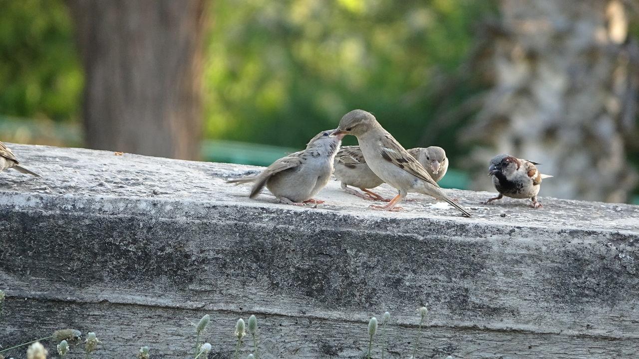 BIRDS PERCHING ON A RETAINING WALL