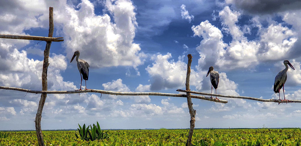White Egret Group Cloud - Sky Sky Plant Nature Day No People Outdoors Water Waterfowl Egret Bird Park Blue Blue Sky Phatthalung Thailand Thalaynoi White