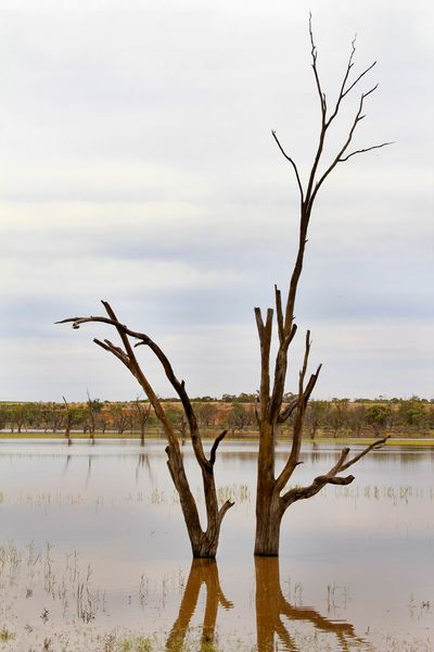 Dead trees in the floodwaters of the river Murray in South Australia Australian Landscape Calm Bare Tree Beauty In Nature Branch Day Dead Tree Floodwaters Lone Nature No People Outdoors Reflections In The Water River Murray Scenics Sky Tranquil Scene Tranquility Tree Tree Trunk Water